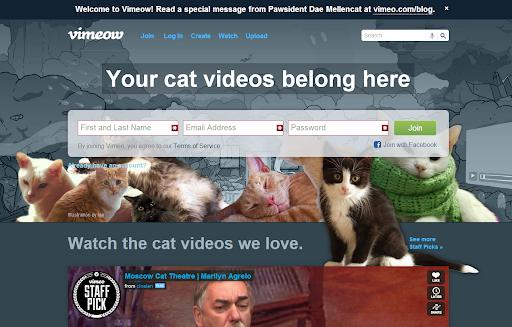 Insert Cat Video Here