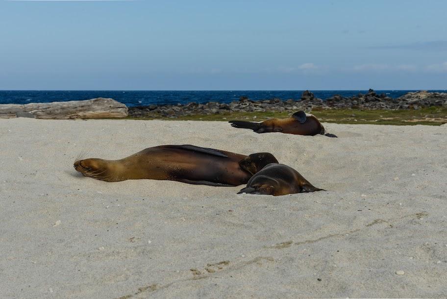 galapagos - Galapagos_FB-49.jpg