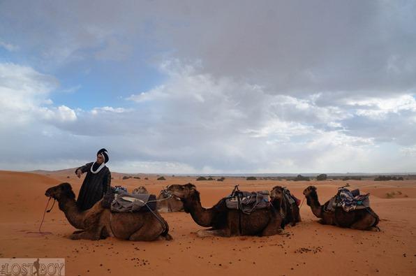 sahara desert-8