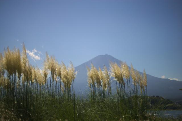 富士山とすすき 河口湖