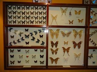 2016.03.14-017 papillons