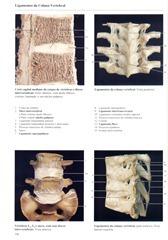 190 Ligamentos da Coluna Vertebral
