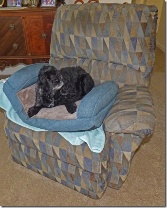 Bubba in his bed on his chair