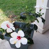 Gardening 2010 - 101_0979.JPG
