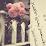 Sara Al Hosani's profile photo
