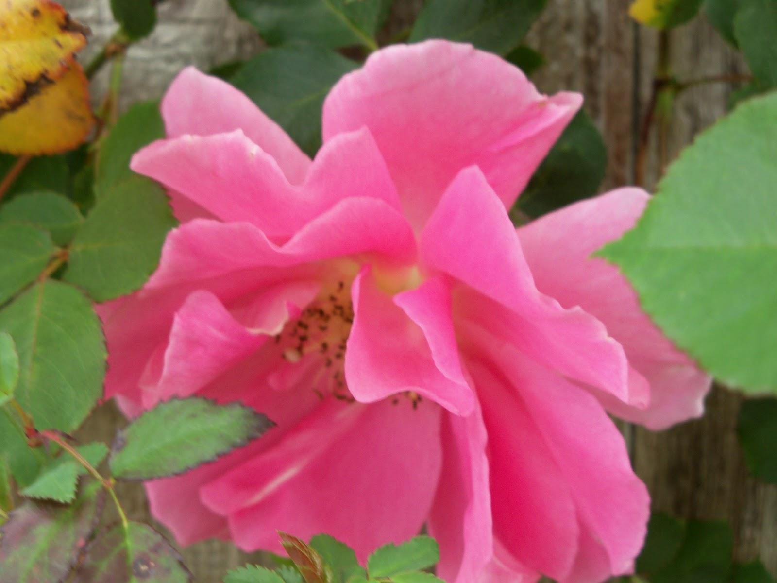 Gardening 2011 - 100_6971.JPG