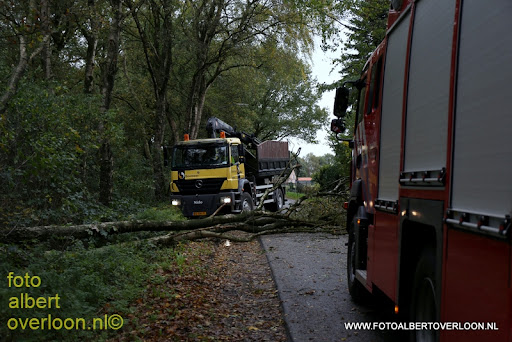 boom over de weg vredepeelweg Overloon 28-10-2013 (2).JPG