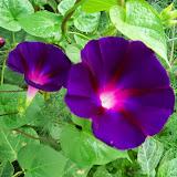 Gardening 2014 - 116_3420.JPG