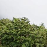 06-18-13 Waikiki, Coconut Island, Kaneohe Bay - IMGP6971.JPG