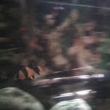 Fish - 1119184145.jpg