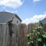 Gardening 2012 - IMG_20120610_152243.jpg