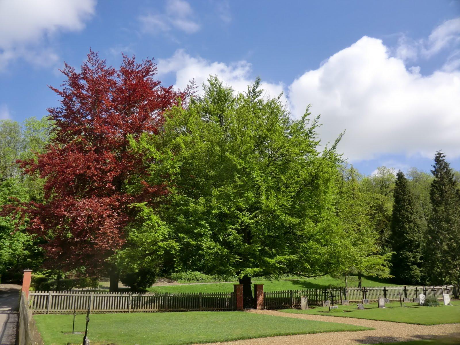 CIMG8123 Cemetery, Woldingham School