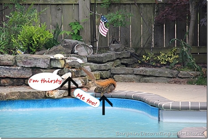 Thirsty Squirrels-Bargain Decorating with Laurie