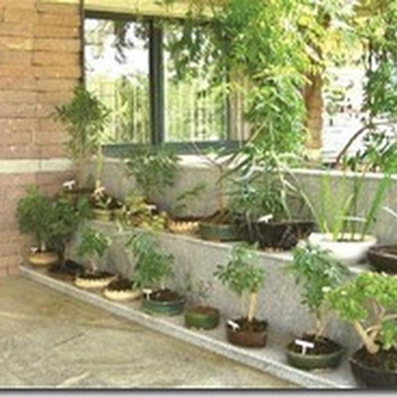 Picha za maua ya urembo yanayopendezesha ukuta ujenzi for Garden design za
