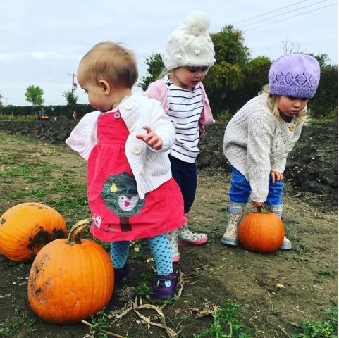 choosing pumpkins at the pumpkin patch
