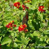10-26-14 Dallas Arboretum - _IGP4331.JPG