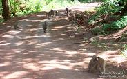 Baboon in Lake Manyara Park