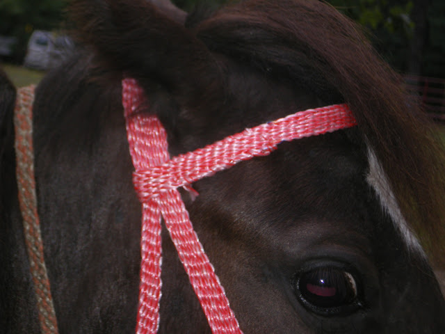 close up of browband - Eclipse - 2010