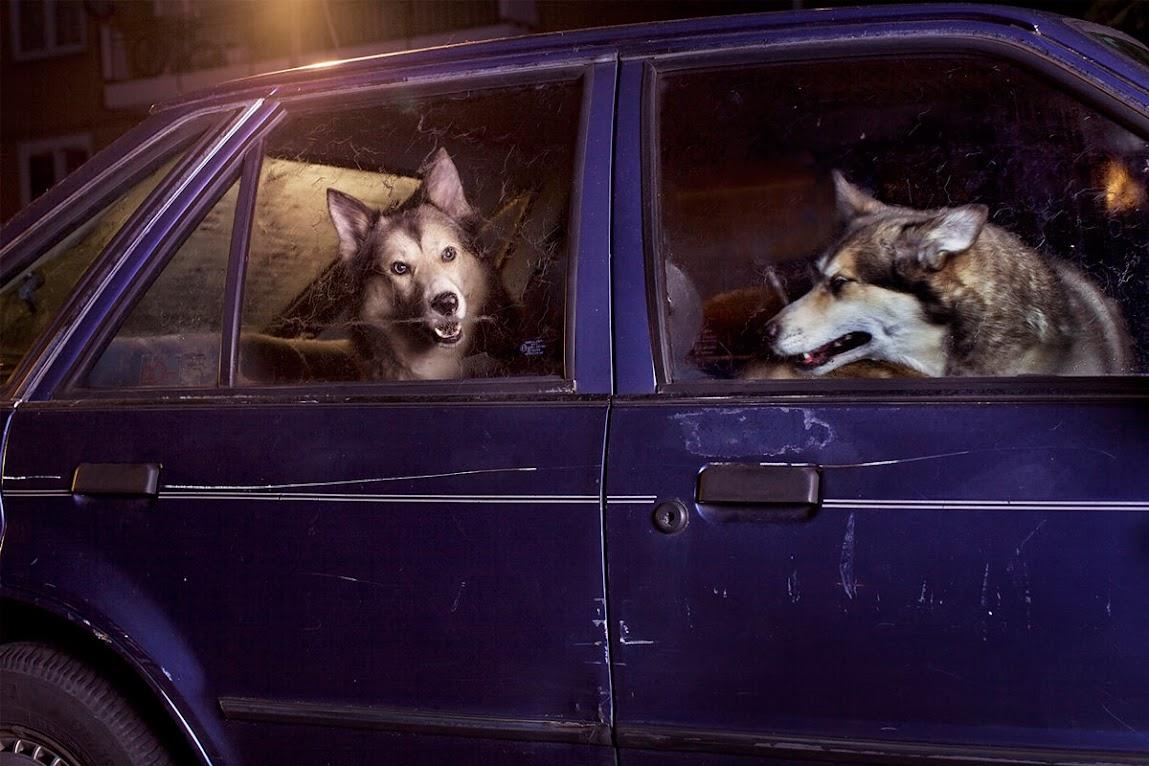 *被鎖在車內沉默的狗:攝影師Martin Usborne 黑暗呈現! 7