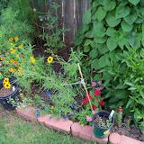 Gardening 2010, Part Three - 101_3736.JPG