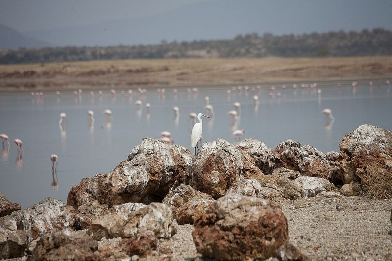 lake-magadi-2