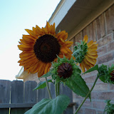 Gardening 2011 - 100_9251.JPG