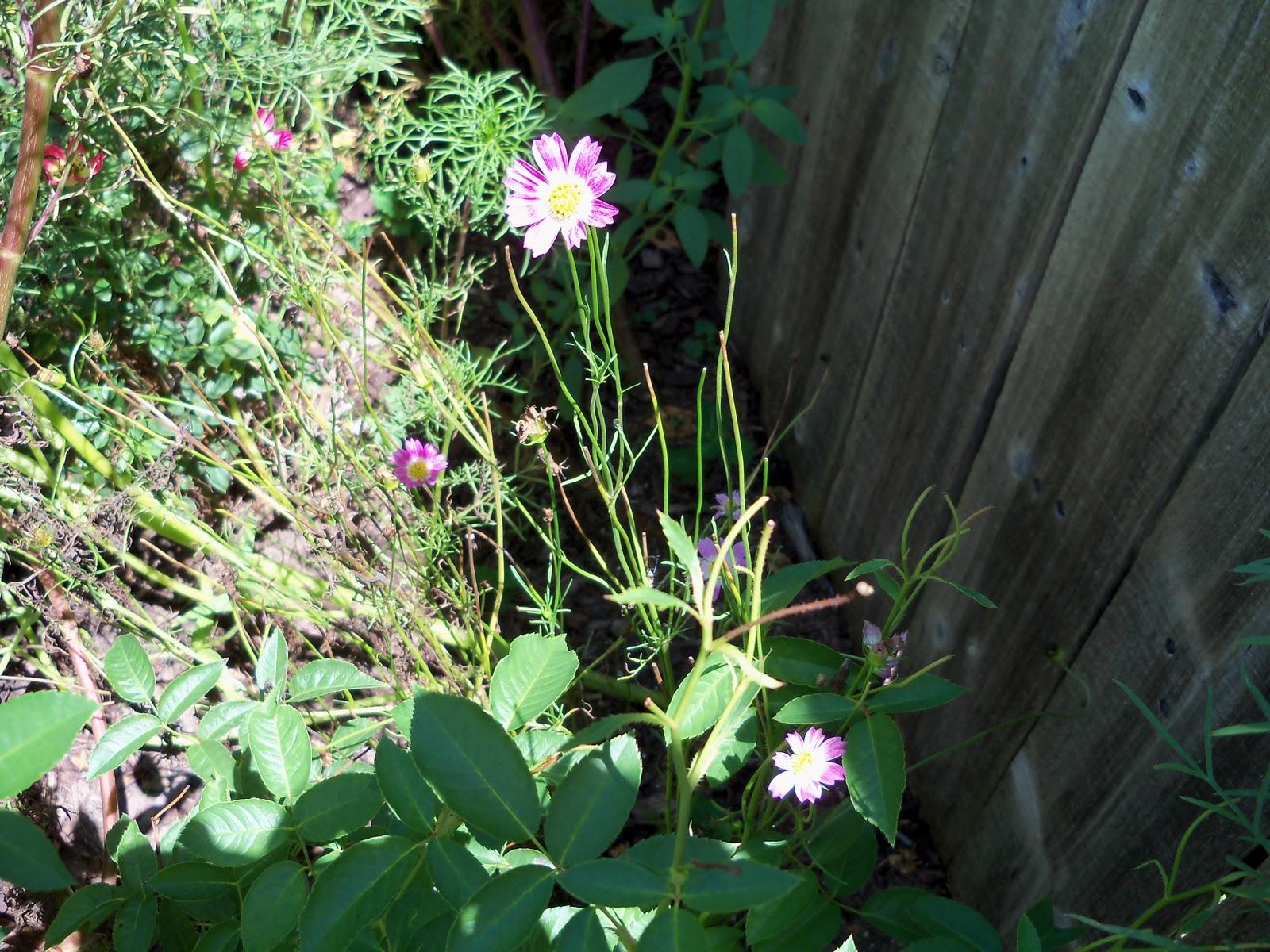 Gardening 2010, Part Three - 101_4362.JPG