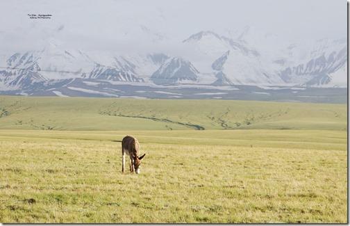 Kyrgyzstan3