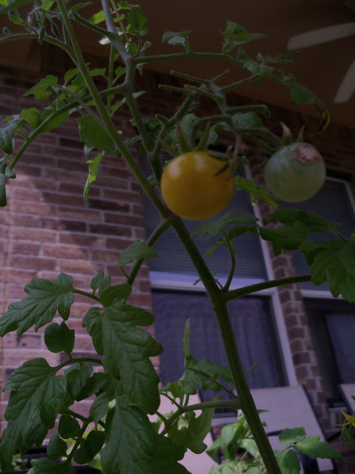 Gardening 2011 - 100_8717.JPG