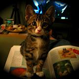 Stanford the Kitten