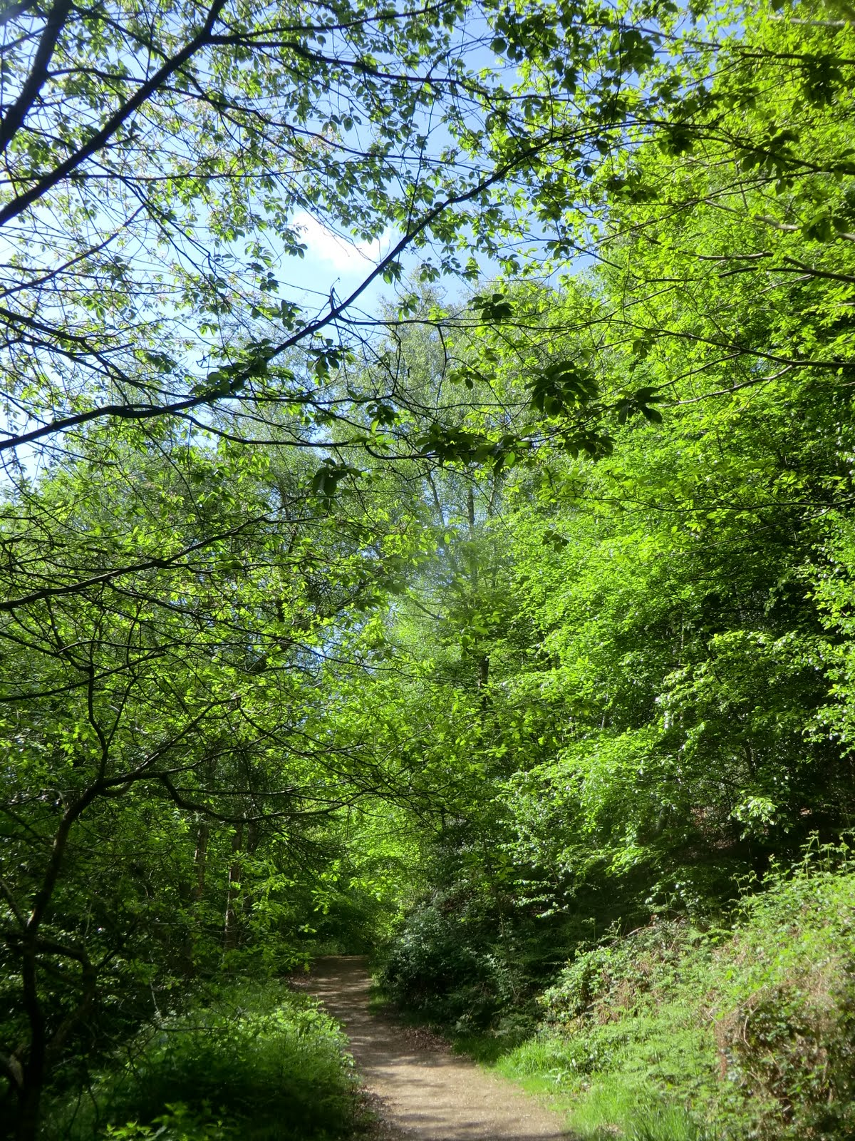 CIMG4298 Woodland Walk, Chartwell