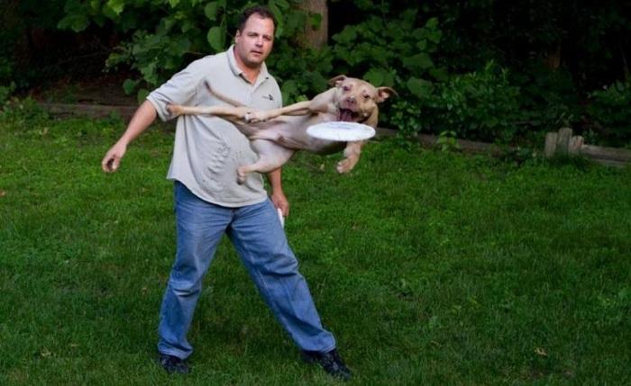 Cách nuôi chó pitbull con