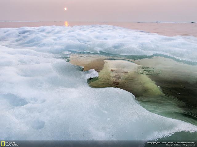 #2013 國家地理攝影大賽:來看看令人驚豔的得奬作品!! 1