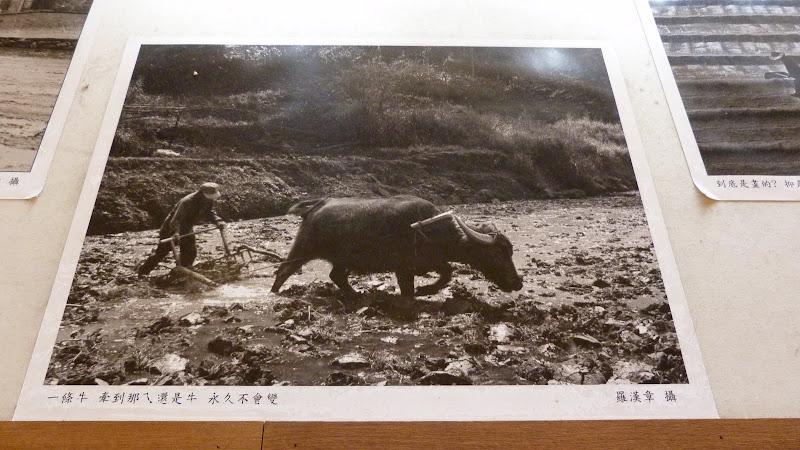 TAIWAN . Fête de la déesse Mazu - P1120507.JPG
