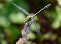 gaffellibel.jpg