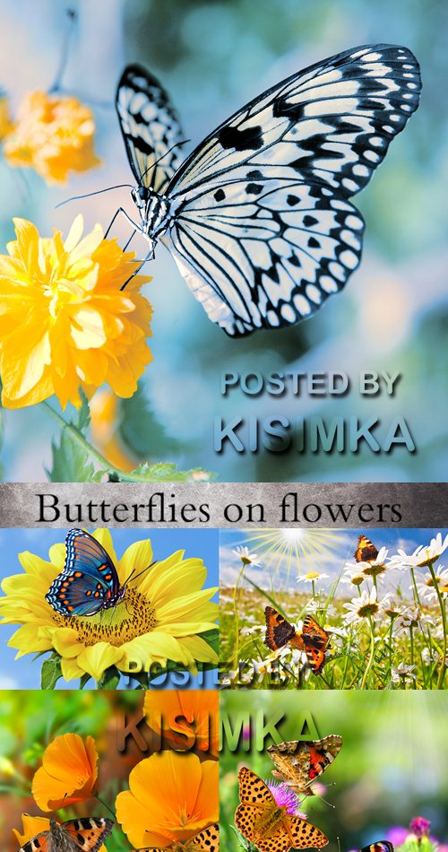 Stock Photo:Butterflies on flowers