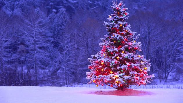 Outdoor Christmas Tree Decorations Ideas Christmas Tree Decorating