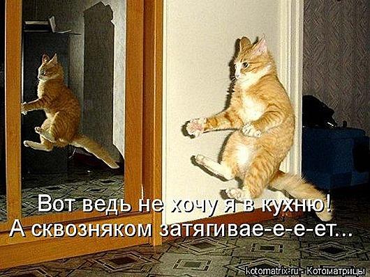 1414135094_kotomatricy-33
