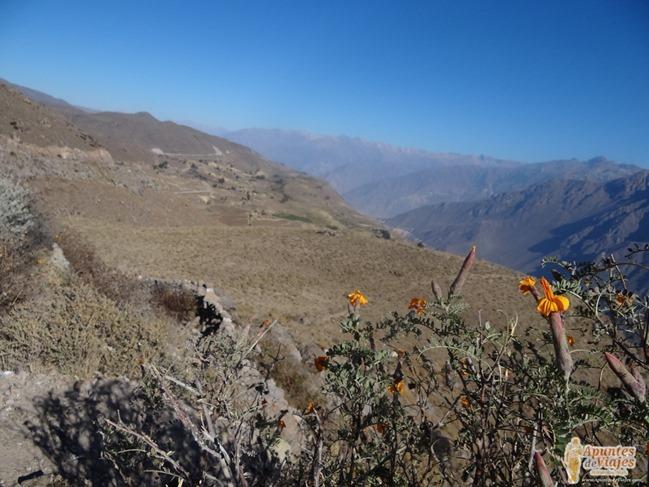 Visitar Cañón del Colca Peru 21