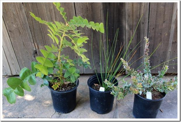 160813_UCSC_Arboretum_plant_purchases_001