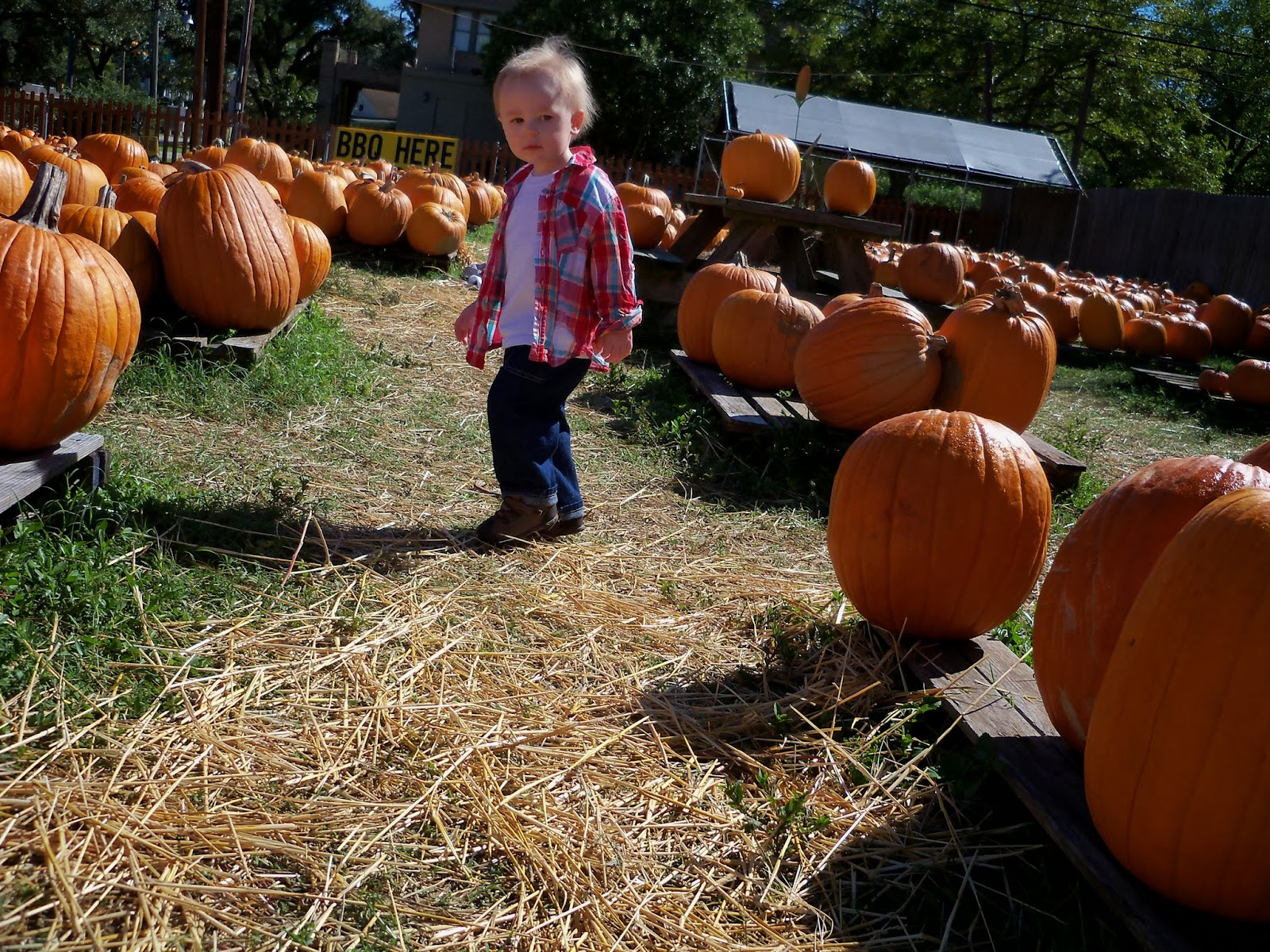 Pumpkin Patch - 115_8233.JPG