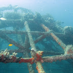 "Artificial reef of ""The Project"" (Pemuteran, North Bali)"