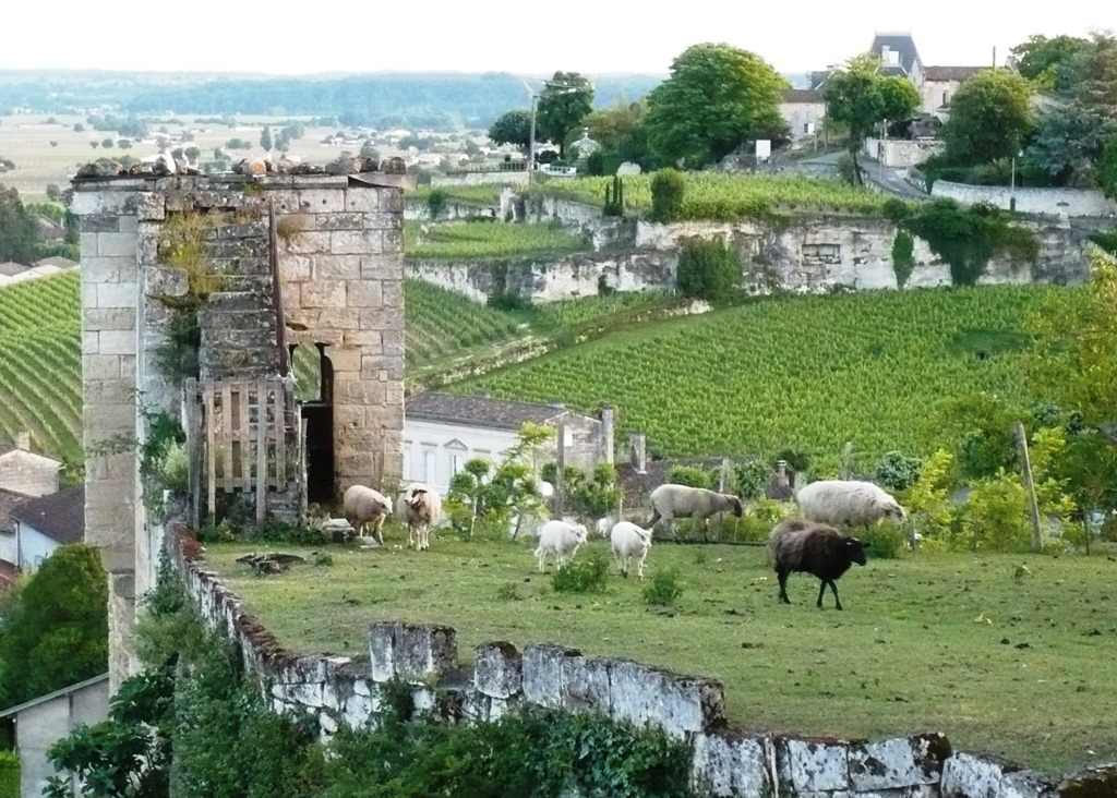 [St+Emilion+views7%5B9%5D]