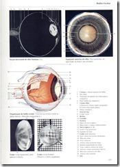 129 Bulbo Ocular