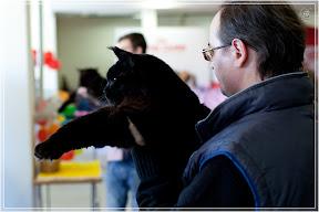 cats-show-25-03-2012-fife-spb-www.coonplanet.ru-042.jpg