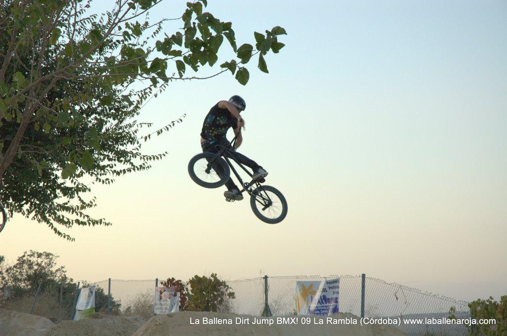 Ballena Dirt Jump BMX 2009 - BMX_09_0160.jpg