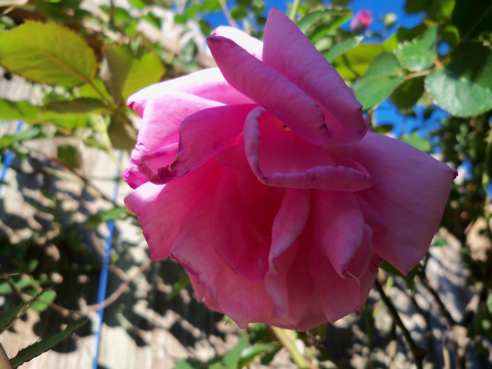 Gardening 2013 - 115_5401.JPG