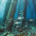 Pillars of the Salt Pier