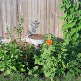 Gardening 2011 - 100_8011.JPG