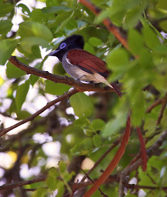 Bird, South Africa